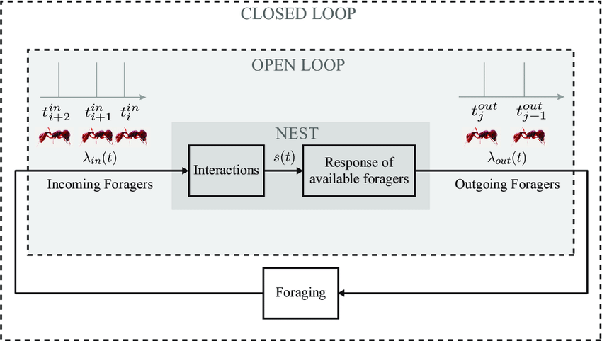 Diagram of the closed-loop model with two components