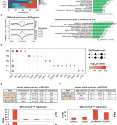 transcription factor network switch likely accompanies dhs reprogramming a bar graph showing the genomic [ 850 x 1066 Pixel ]