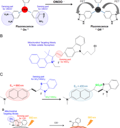 a triphenylphosphonium carbon dot conjugate tpp c dots and its interaction with the peroxinitrite radical 124 b design and sensing mechanism of the  [ 850 x 1242 Pixel ]