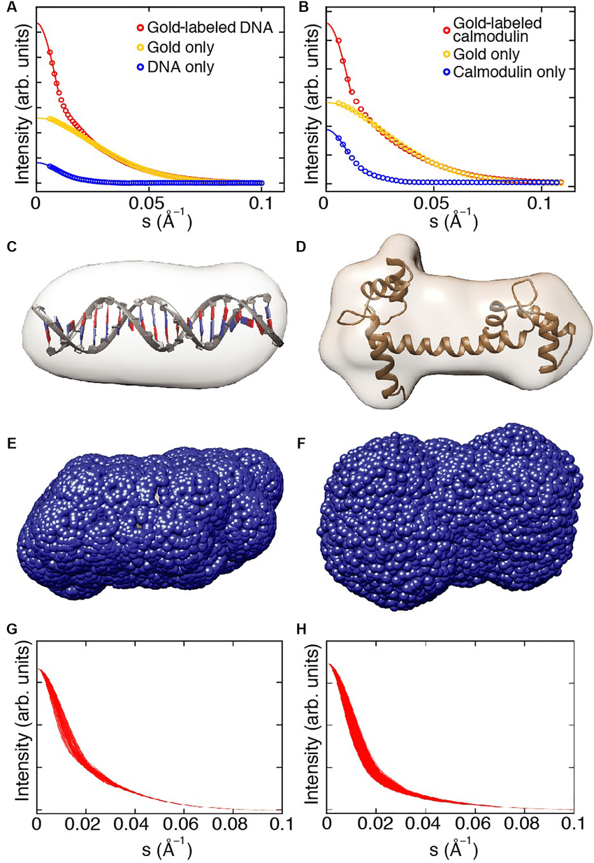 medium resolution of saxs shape reconstruction trial gold label positions and computed download scientific diagram