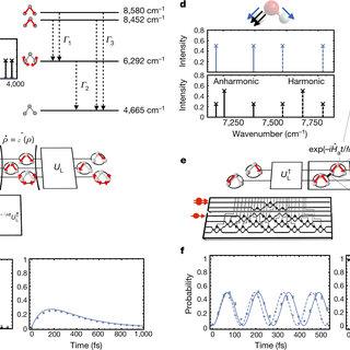 Simulating the vibrational quantum dynamics of molecules