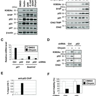 Biological evaluation of p53 activation by flavonoids in