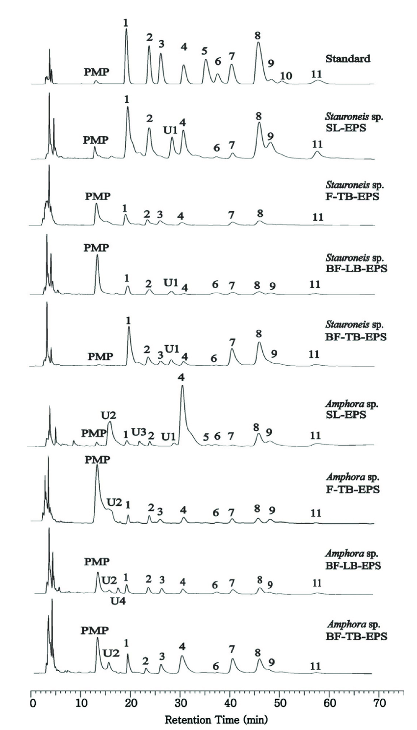 hight resolution of the hplc profiles of monosaccharides in different eps fraction samples from two diatoms samples were
