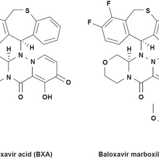 In vitro endonuclease activity and inhibition of PA