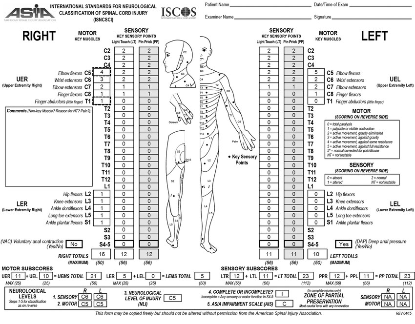 Worksheet of an imaginary patient with a spinal cord