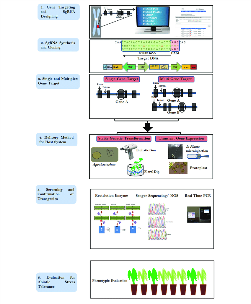 hight resolution of flow chart describing the steps involved in crispr cas9 based genome editing step