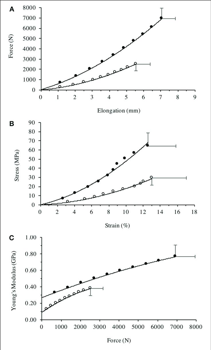 hight resolution of patella tendon a force elongation relationship b stress