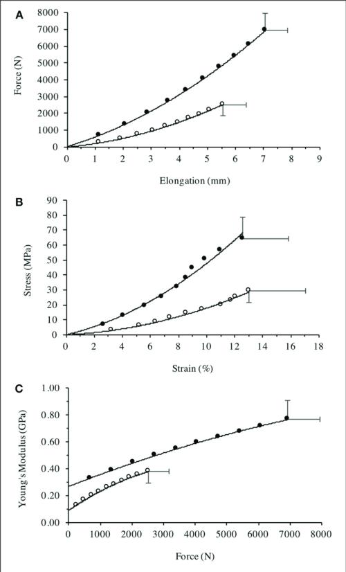 small resolution of patella tendon a force elongation relationship b stress