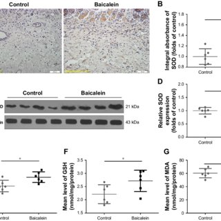 Effects of SBRE on H2O2-induced ROS generation in HaCaT