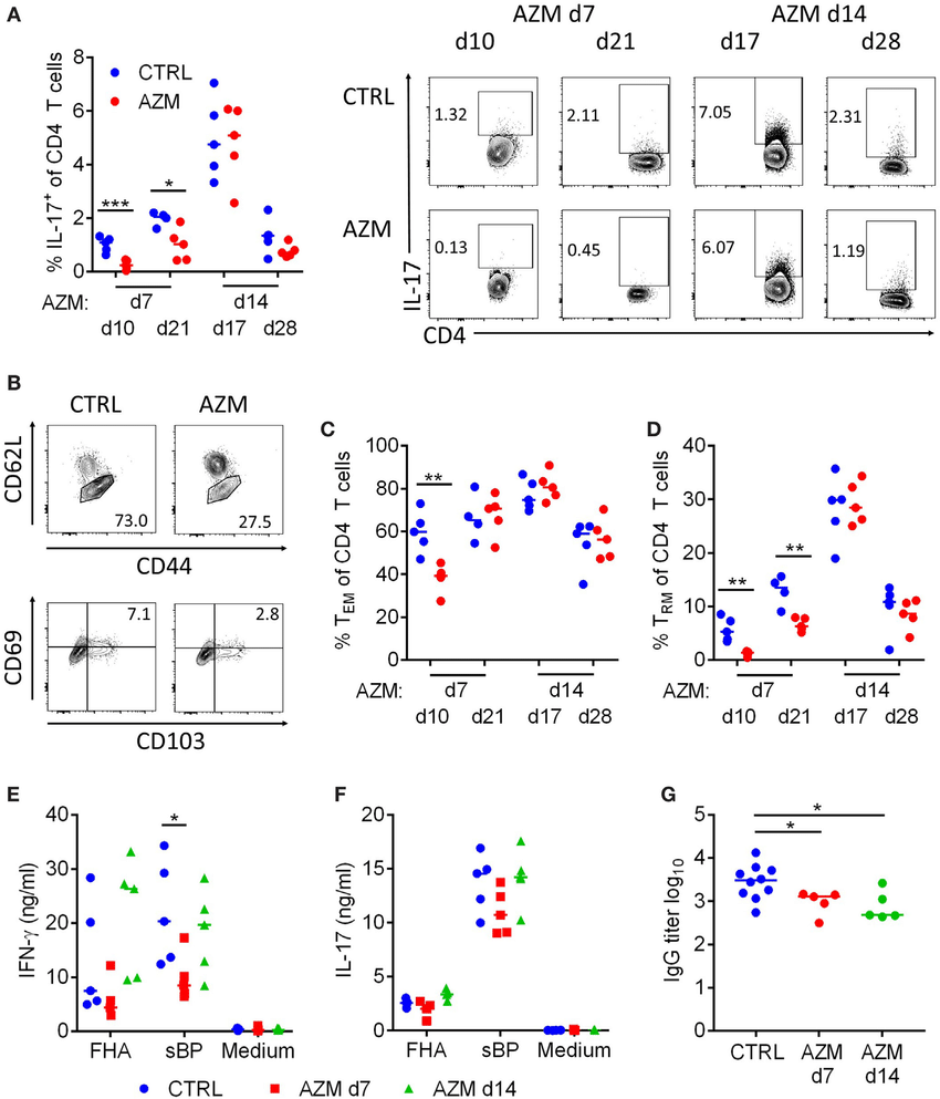 hight resolution of azithromycin azm treatment at 7 days post bordetella pertussis challenge modulates induction of t cell and antibody responses cd4 t cells in lung digests