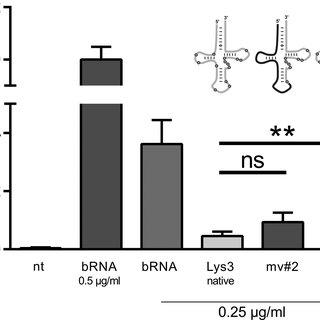 RNA modifications in mammalian tRNA Lys 3. Left part