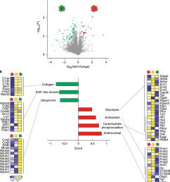 differentially regulated molecular pathways in distinct cns phagocyte phenotypes a volcano plot showing the [ 850 x 961 Pixel ]