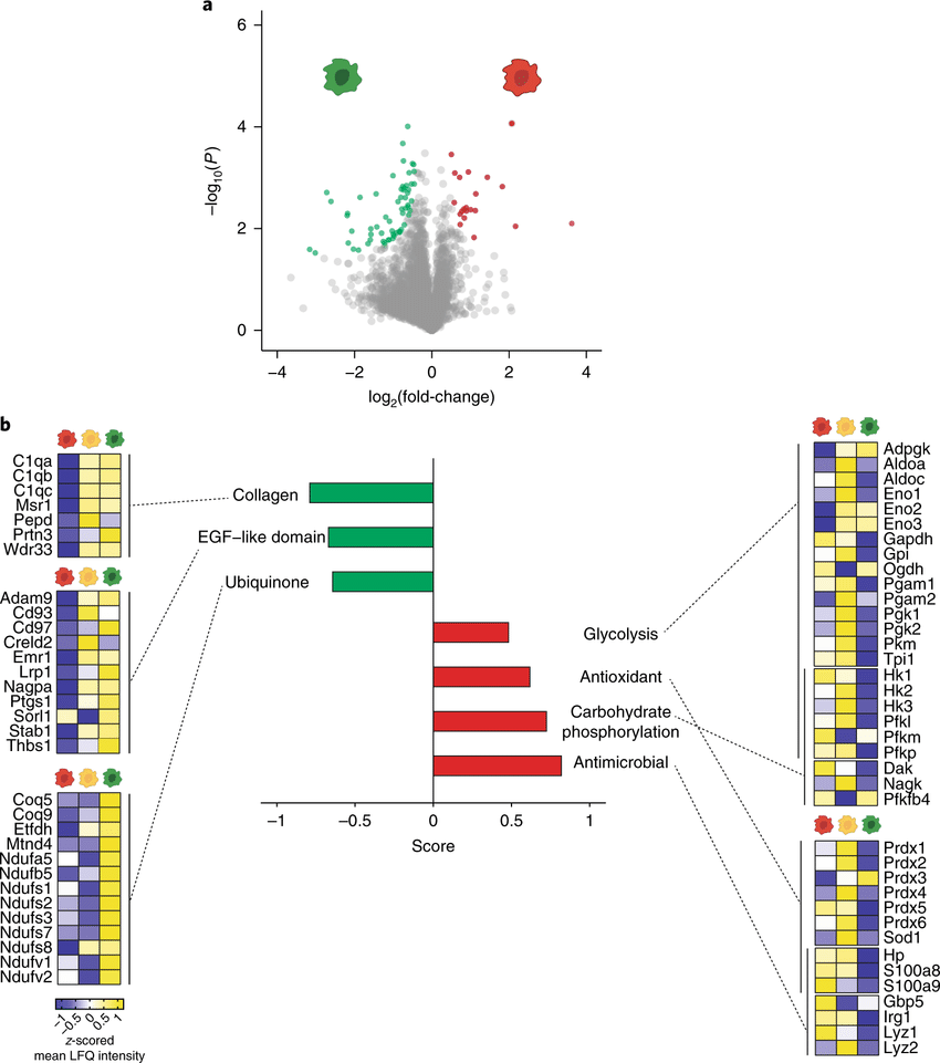 medium resolution of differentially regulated molecular pathways in distinct cns phagocyte phenotypes a volcano plot showing the