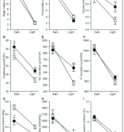 dark and light phase analysis of urine and water food intake rats [ 850 x 1292 Pixel ]