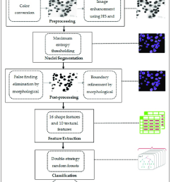 block diagram of the proposed algorithm for detecting and classifying overlapping nuclei  [ 850 x 1237 Pixel ]