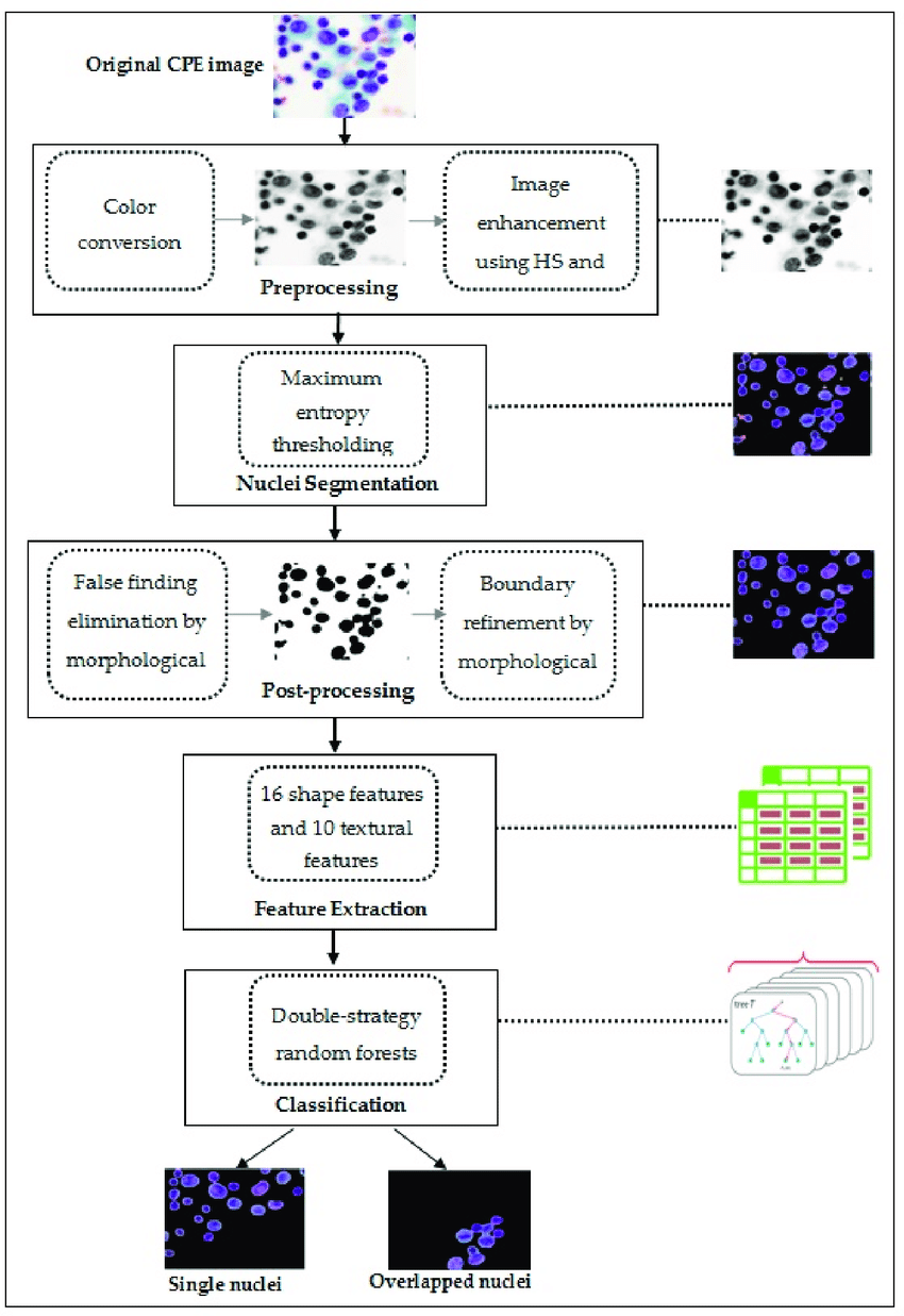 hight resolution of block diagram of the proposed algorithm for detecting and classifying overlapping nuclei