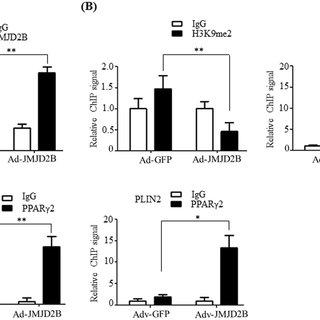 Scopolin exerts its anti-lipogenic activity via SIRT1 in