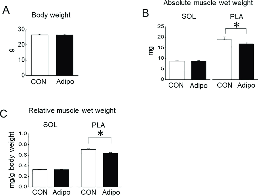 mouse skeletal diagram blank animal cell to label effects of adiporon administration on muscles a body download scientific