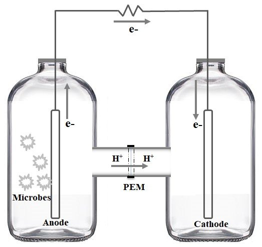 Schematic diagram of dual-chambered microbial fuel cell