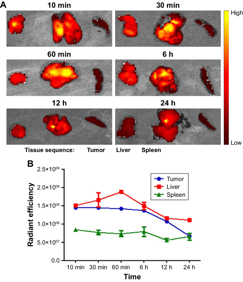 medium resolution of  a in vitro fluorescence imaging of the tumor liver and spleen at