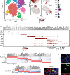 single cell expression atlas of first trimester villi a cell type [ 850 x 1090 Pixel ]