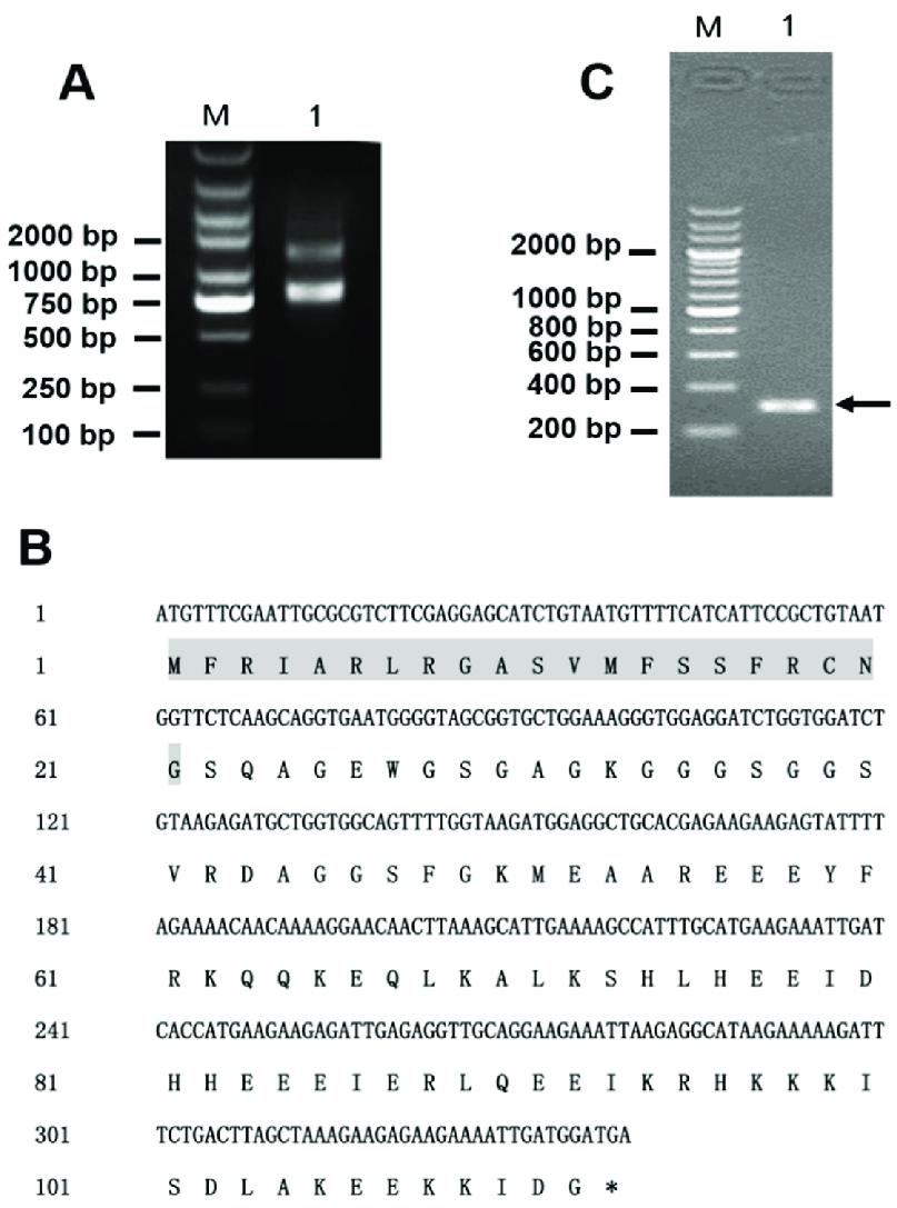 medium resolution of gene cloning of latroeggtoxin v a identification of the total rna integrity