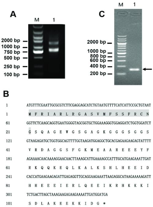 small resolution of gene cloning of latroeggtoxin v a identification of the total rna integrity
