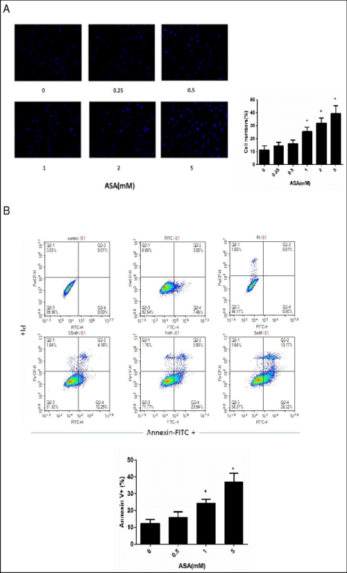 small resolution of effects of different c o n c e n t r a t i o n s of aspirin on tsc apoptosis hoechst 33342 staining and annexin v