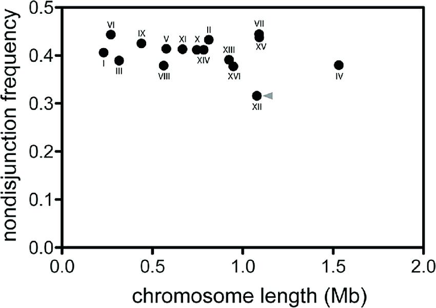 28 Which Diagram Shows A Homologous Chromosome Pair That