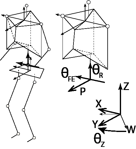 Wireframe of a standing subject showing the coordinate