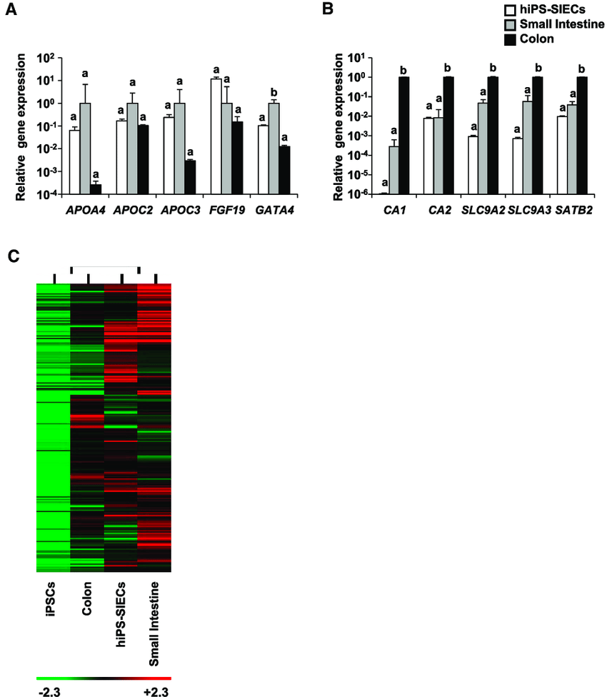 hight resolution of expression analysis of small intestinal epithelial cell markers and colonic epithelial cell markers a and