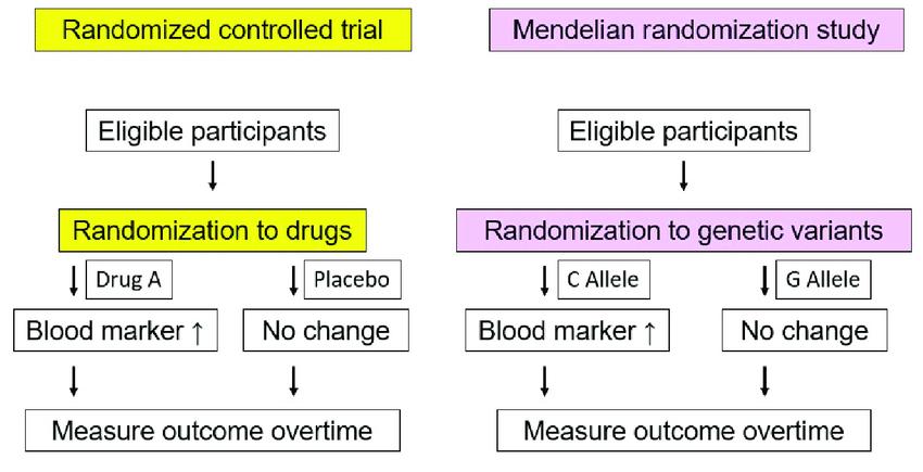 Scheme of randomized controlled trial and Mendelian randomization... | Download Scientific Diagram