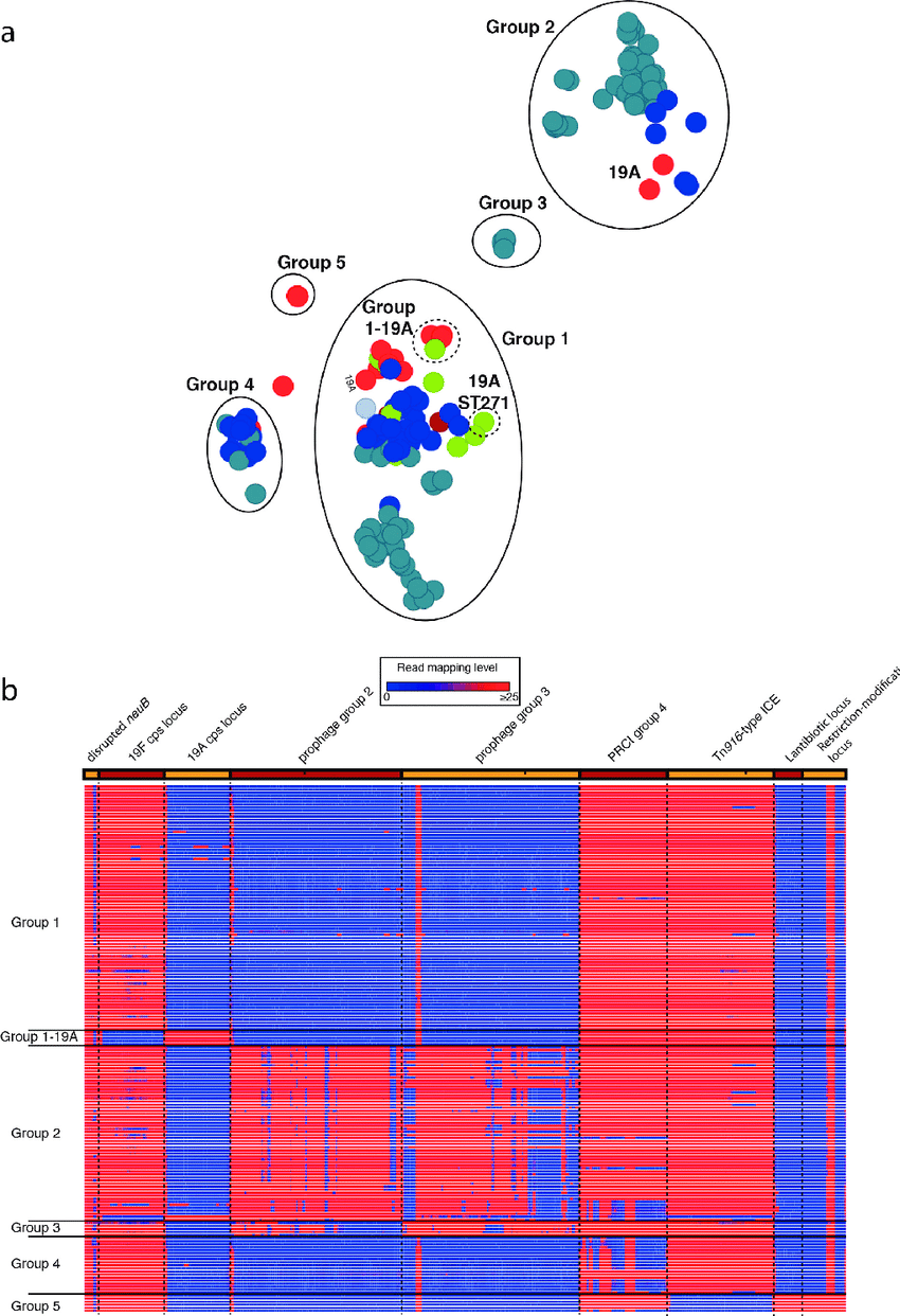 medium resolution of analysis of the streptococcus pneumoniae pmen14 lineage a annotated output of the panini