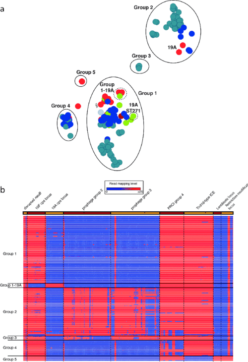 small resolution of analysis of the streptococcus pneumoniae pmen14 lineage a annotated output of the panini