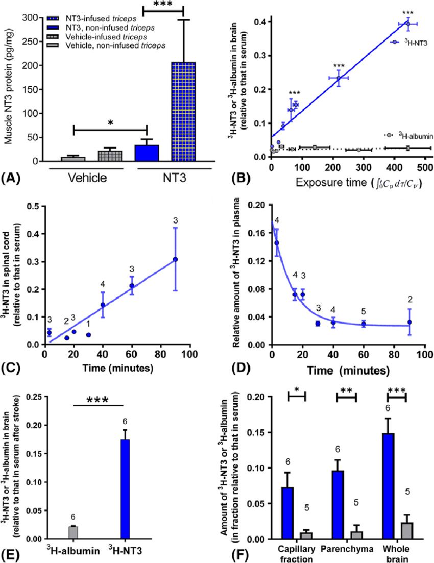 triceps brachii diagram 2004 mitsubishi lancer radio wiring levels of neurotrophin 3 nt3 were increased in download scientific