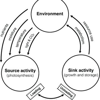 (PDF) Source-Sink Relationships in Crop Plants and Their