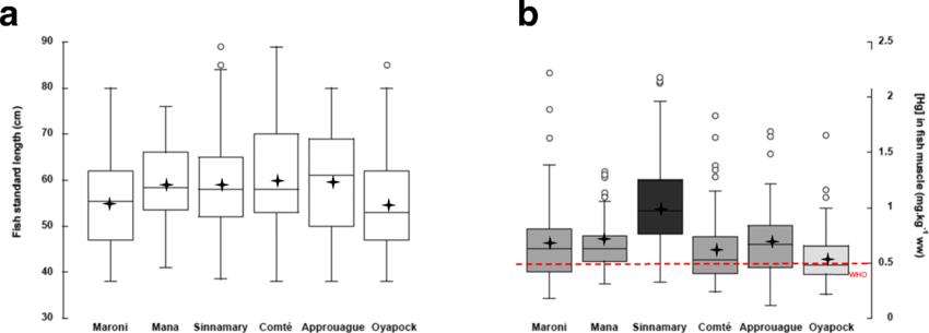 Box plots of aHoplias aimara standard length (in cm) and b