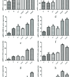 effects of lsa on the expression of antioxidant genes in ileum the mrna expression level [ 850 x 1223 Pixel ]