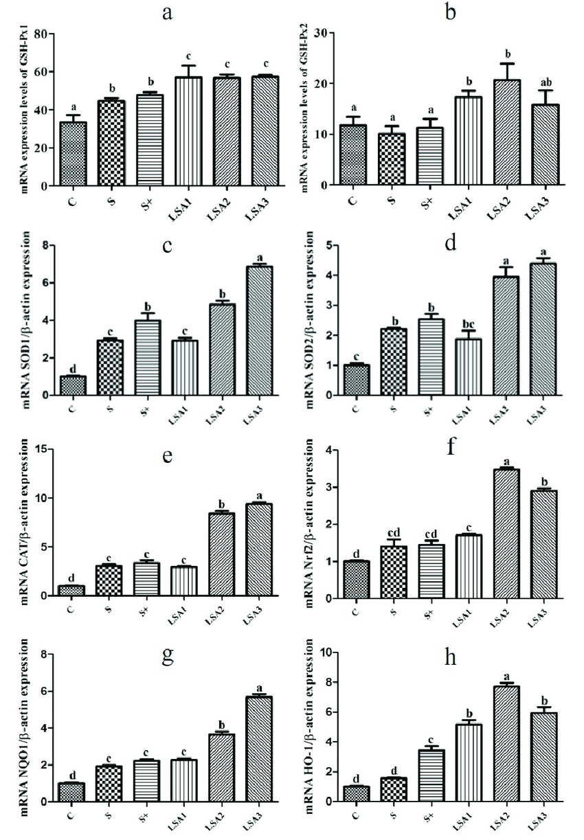 hight resolution of effects of lsa on the expression of antioxidant genes in ileum the mrna expression level