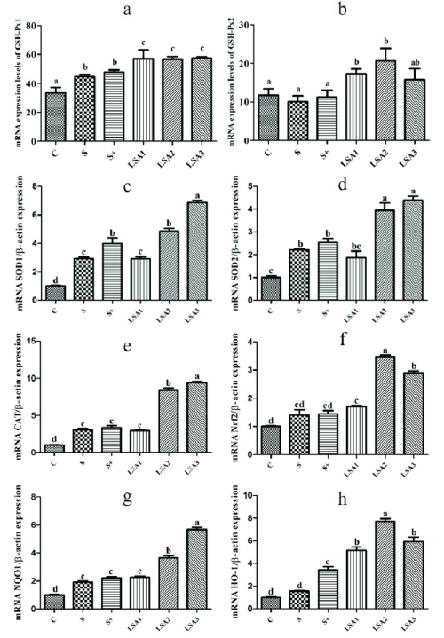 small resolution of effects of lsa on the expression of antioxidant genes in ileum the mrna expression level