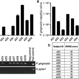 (PDF) Porphyromonas gingivalis in Alzheimer's disease