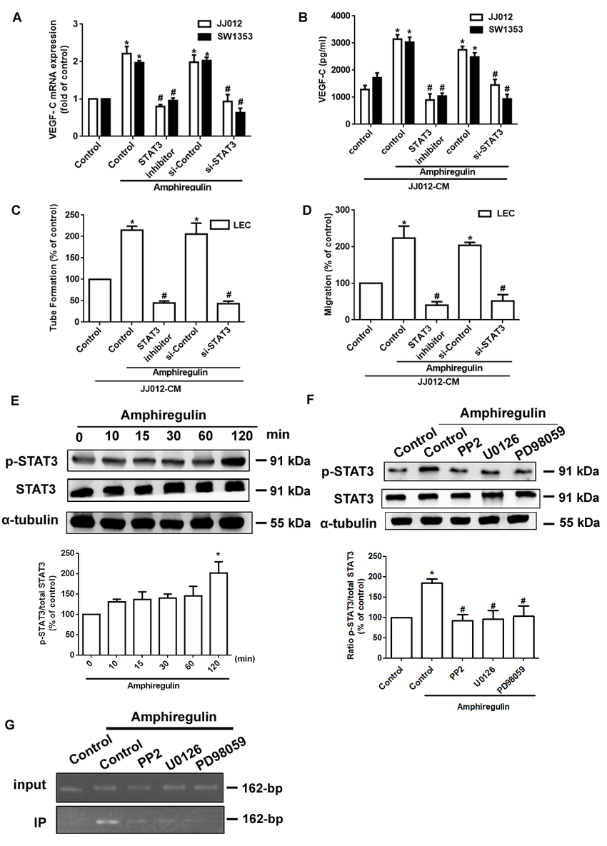 AR induced VEGF-C expression and lymphangiogenesis in
