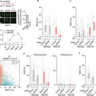 Histone deacetylase (HDAC) inhibitors suppress IRIF
