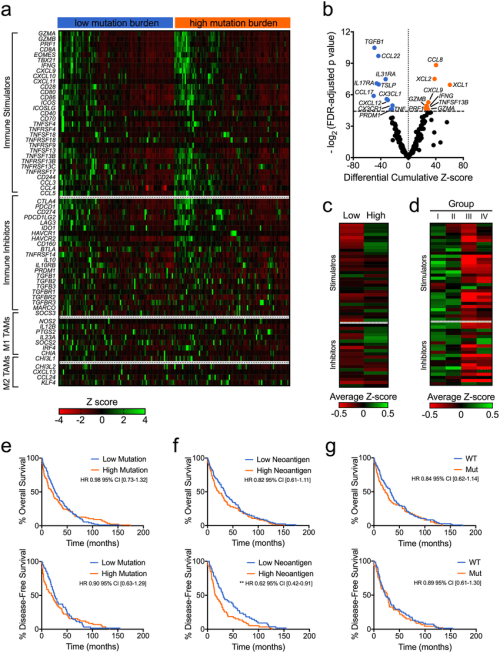 small resolution of mutation burden is associated with a unique immune and clinical download scientific diagram