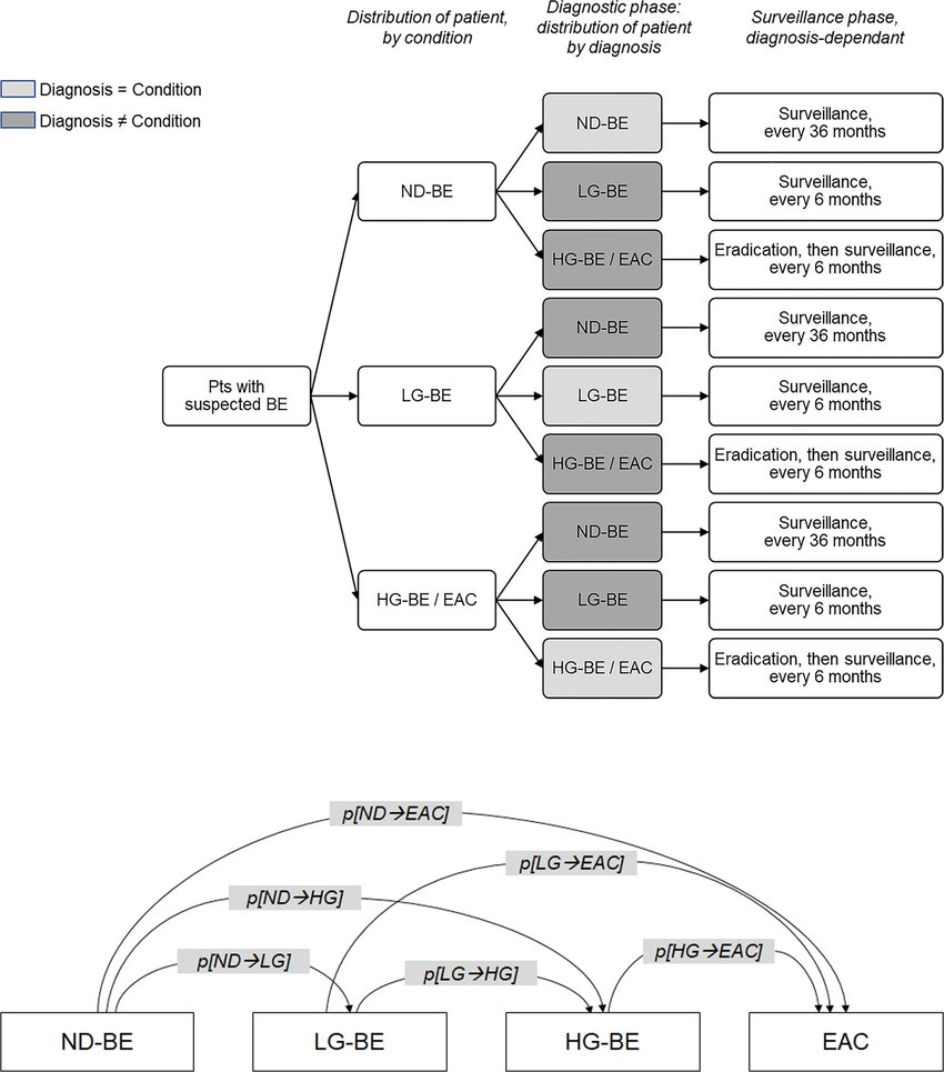Decision tree and Markov model diagrams. (A) Decision tree