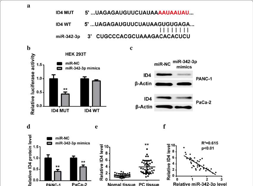 ID4 was a direct target of miR-342-3p in PC. a Schematic