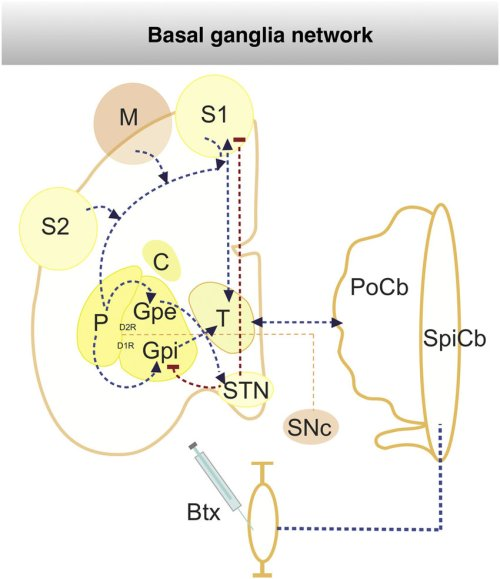 small resolution of schematic representation of botox treatment bnt in basalganglia network the well characterized basal