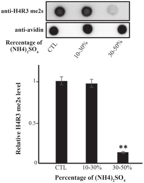 small resolution of demethylation activity exists at a 30 50 nh4 2 so 4 precipitation