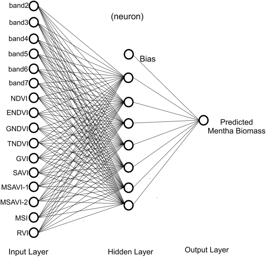 The architecture of ANN model used to estimate the menthol