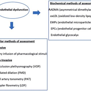 Studies assessing endothelial dysfunction in different ...
